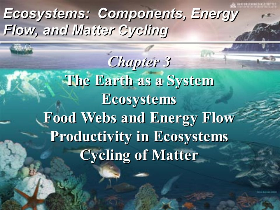 Ecosystems: Components, Energy Flow, and Matter Cycling Chapter 3 The Earth as a System Ecosystems Food Webs and Energy Flow Productivity in Ecosystem