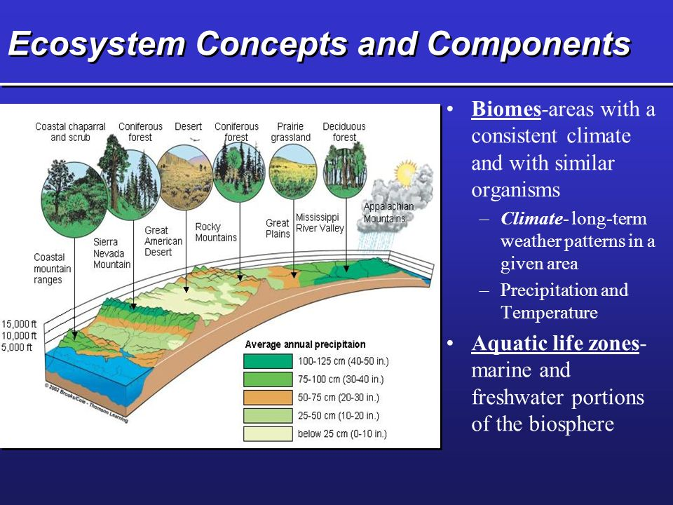 Ecosystem Concepts and Components Biomes-areas with a consistent climate and with similar organisms –Climate- long-term weather patterns in a given ar