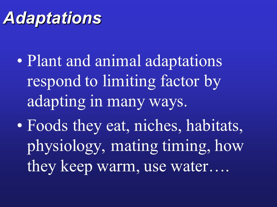 Adaptations Plant and animal adaptations respond to limiting factor by adapting in many ways. Foods they eat, niches, habitats, physiology, mating tim