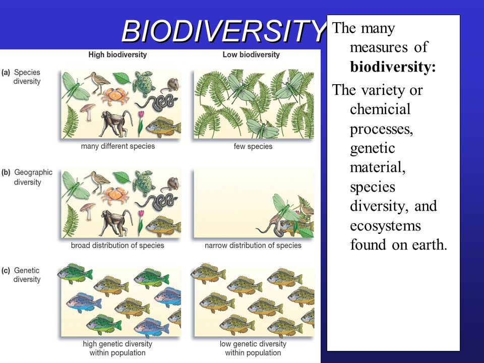 BIODIVERSITY The many measures of biodiversity: The variety or chemicial processes, genetic material, species diversity, and ecosystems found on earth
