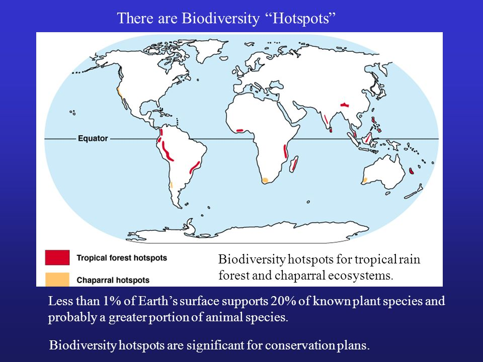 There are Biodiversity Hotspots Less than 1% of Earths surface supports 20% of known plant species and probably a greater portion of animal species. B