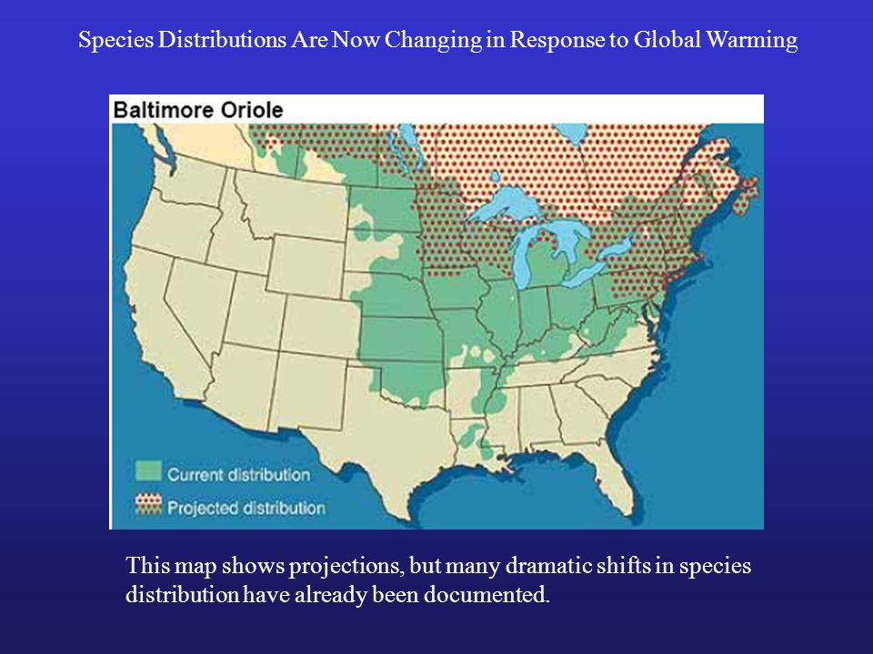 Species Distributions Are Now Changing in Response to Global Warming This map shows projections, but many dramatic shifts in species distribution have
