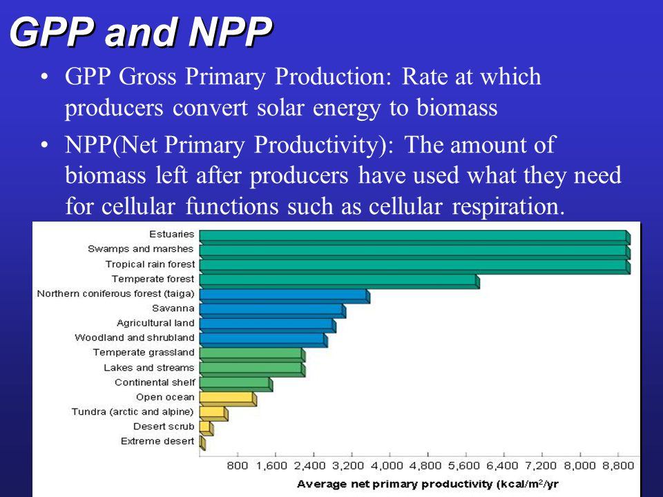 GPP and NPP GPP Gross Primary Production: Rate at which producers convert solar energy to biomass NPP(Net Primary Productivity): The amount of biomass