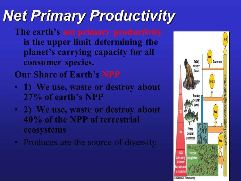 Net Primary Productivity The earths net primary productivity is the upper limit determining the planets carrying capacity for all consumer species. Ou