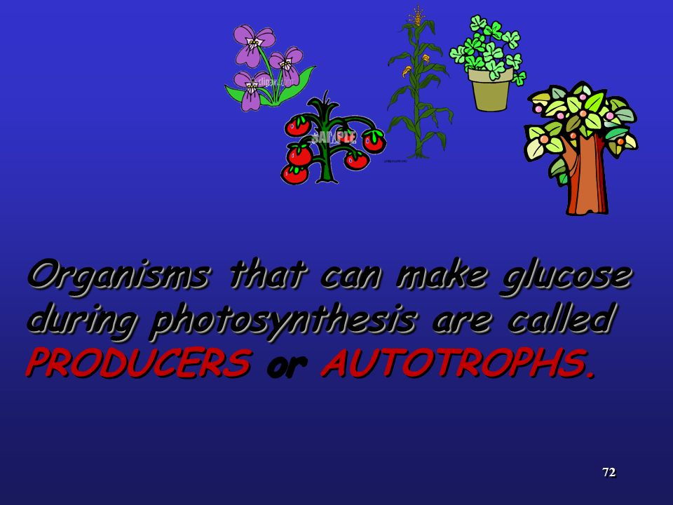 72 Organisms that can make glucose during photosynthesis are called Organisms that can make glucose during photosynthesis are called PRODUCERS or AUTO