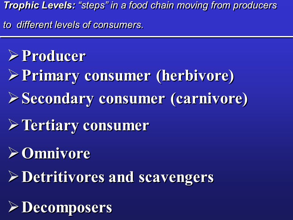 Trophic Levels: steps in a food chain moving from producers to different levels of consumers. Producer Primary consumer (herbivore) Producer Primary c