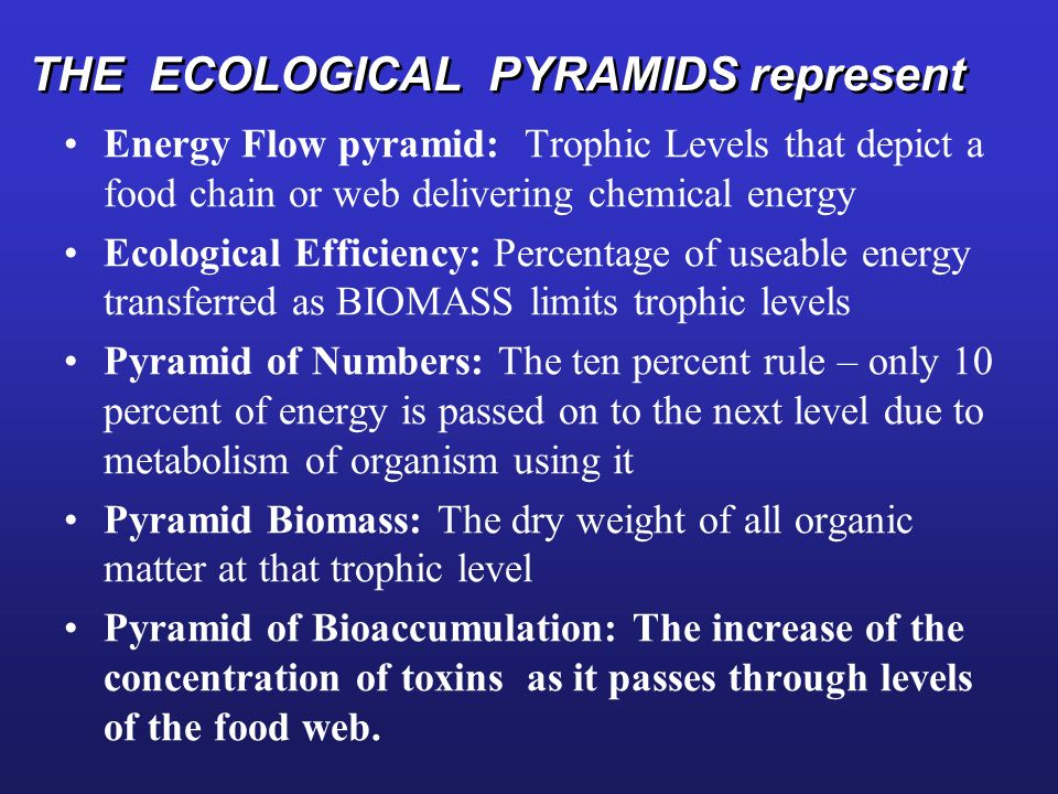 THE ECOLOGICAL PYRAMIDS represent Energy Flow pyramid: Trophic Levels that depict a food chain or web delivering chemical energy Ecological Efficiency