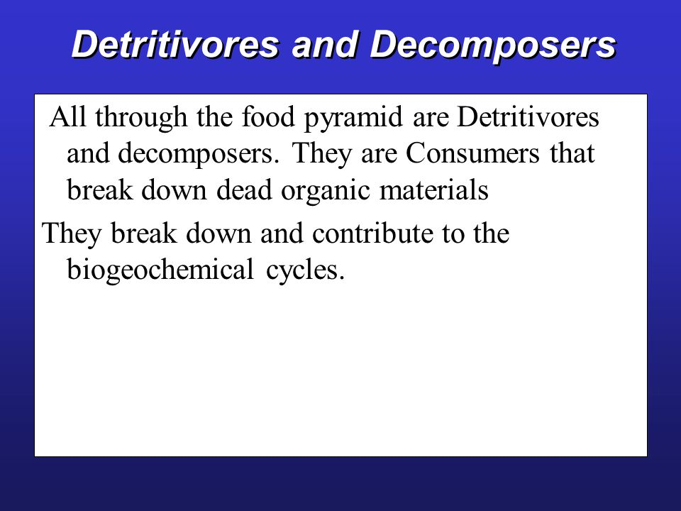 Detritivores and Decomposers All through the food pyramid are Detritivores and decomposers. They are Consumers that break down dead organic materials