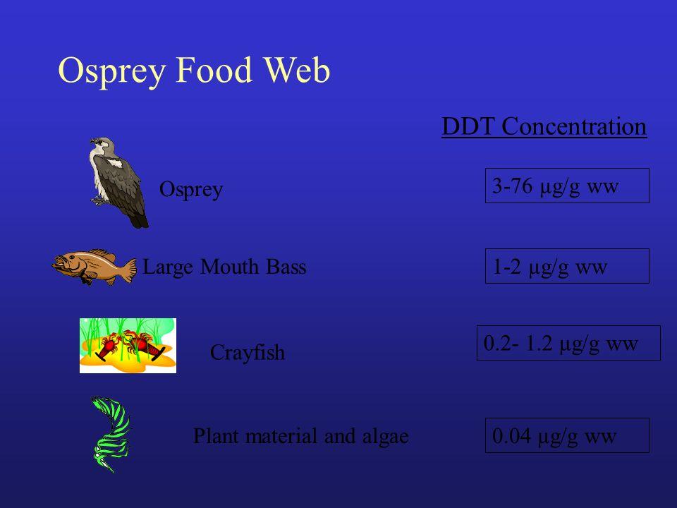 Osprey Food Web Large Mouth Bass Crayfish Plant material and algae 3-76 µg/g ww 1-2 µg/g ww 0.2- 1.2 µg/g ww 0.04 µg/g ww DDT Concentration Osprey
