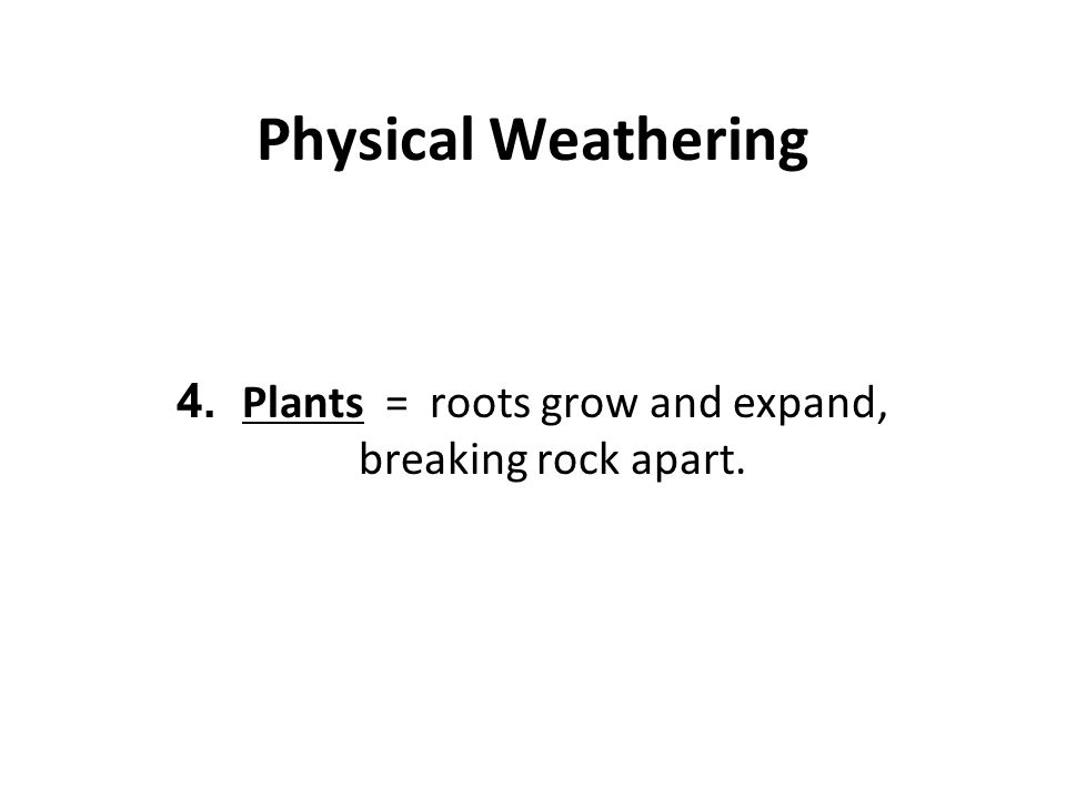 Physical Weathering 4. Plants = roots grow and expand, breaking rock apart.