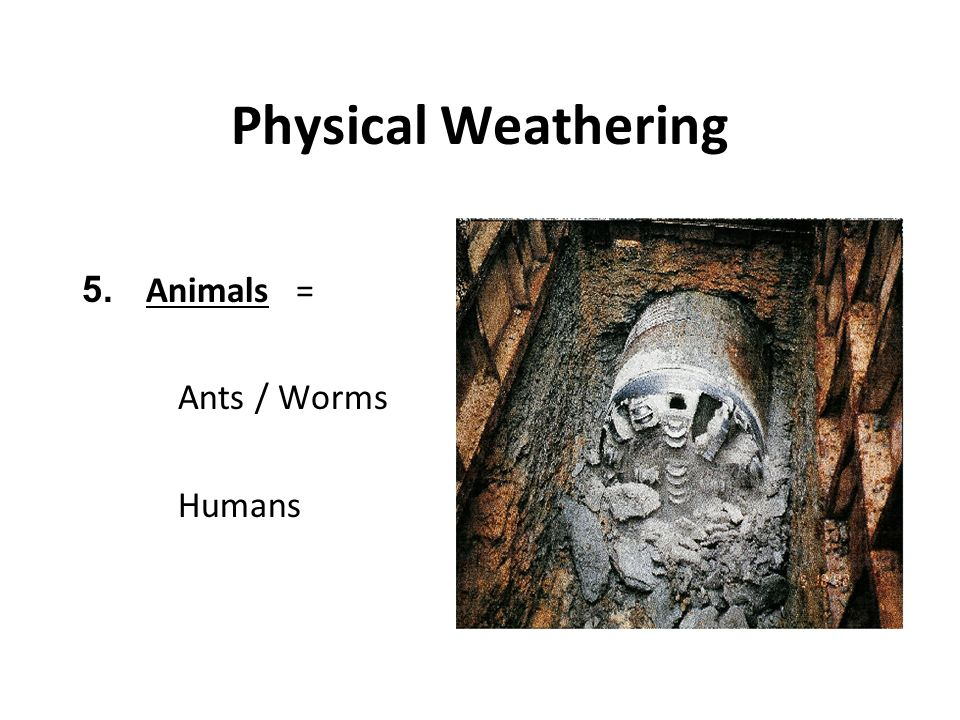 Physical Weathering 5. Animals = Ants / Worms Humans
