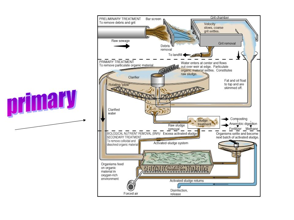 Fig. 18.11B In primary treatment sludge is removed and the clarified water then proceeds to secondary treatment. Raw sewage moves from the grit chambe