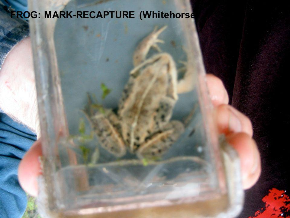 FROG: MARK-RECAPTURE (Whitehorse)