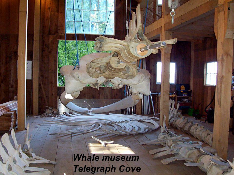 Whale museum Telegraph Cove