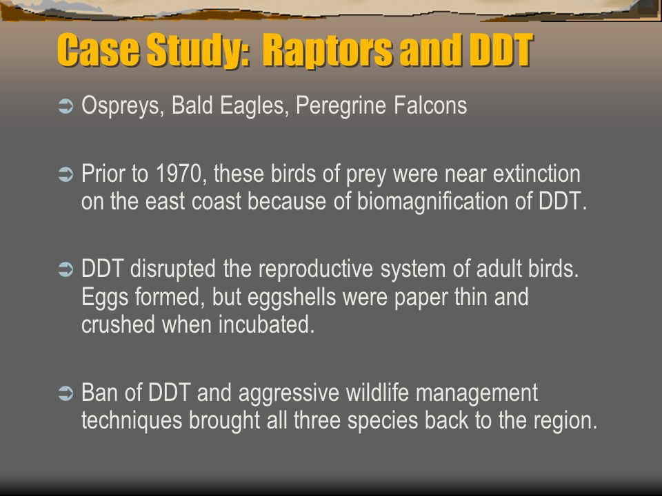 DDT is fat soluble Accumulated concentrations are magnified at each higher trophic level For example: If each phytoplankton in the Long Island Sound r