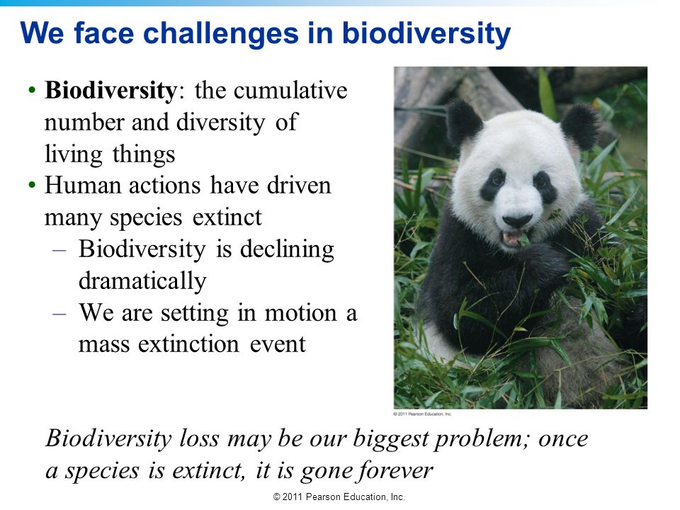 © 2011 Pearson Education, Inc. We face challenges in biodiversity Biodiversity: the cumulative number and diversity of living things Human actions hav