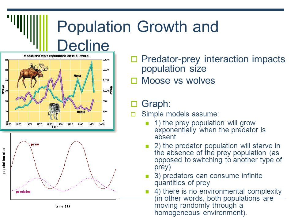 Population Growth and Decline Predator-prey interaction impacts population size Moose vs wolves Graph: Simple models assume: 1) the prey population wi