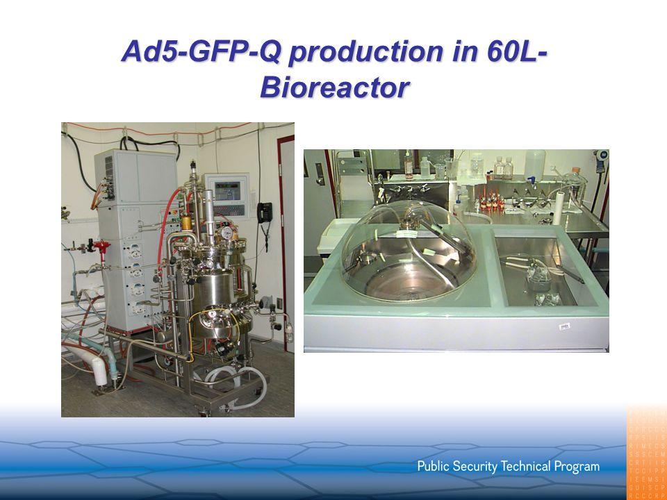 Ad5-GFP-Q production in 60L- Bioreactor