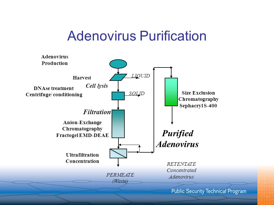 Adenovirus Purification DNAse treatment Centrifuge/ conditioning Adenovirus Production PERMEATE (Waste) Cell lysis LIQUID Harvest Ultrafiltration Conc