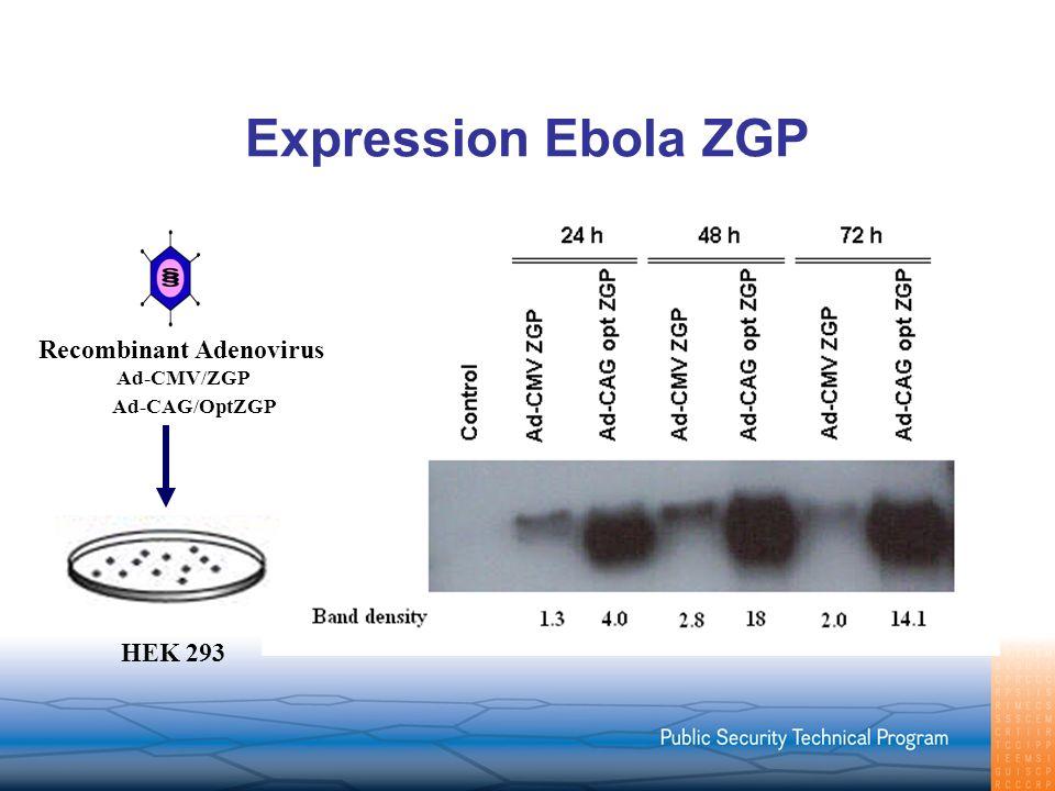 Expression Ebola ZGP Recombinant Adenovirus HEK 293 Ad-CMV/ZGP Ad-CAG/OptZGP