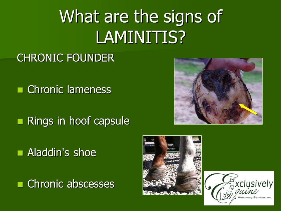 What are the signs of LAMINITIS? CHRONIC FOUNDER Chronic lameness Chronic lameness Rings in hoof capsule Rings in hoof capsule Aladdin's shoe Aladdin'