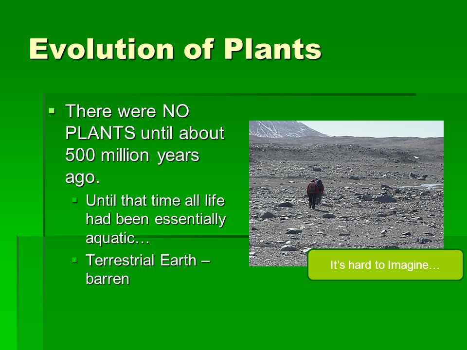 Evolution of Plants There were NO PLANTS until about 500 million years ago. There were NO PLANTS until about 500 million years ago. Until that time al
