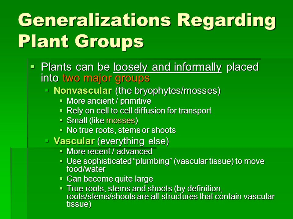 Generalizations Regarding Plant Groups Plants can be loosely and informally placed into two major groups Plants can be loosely and informally placed i