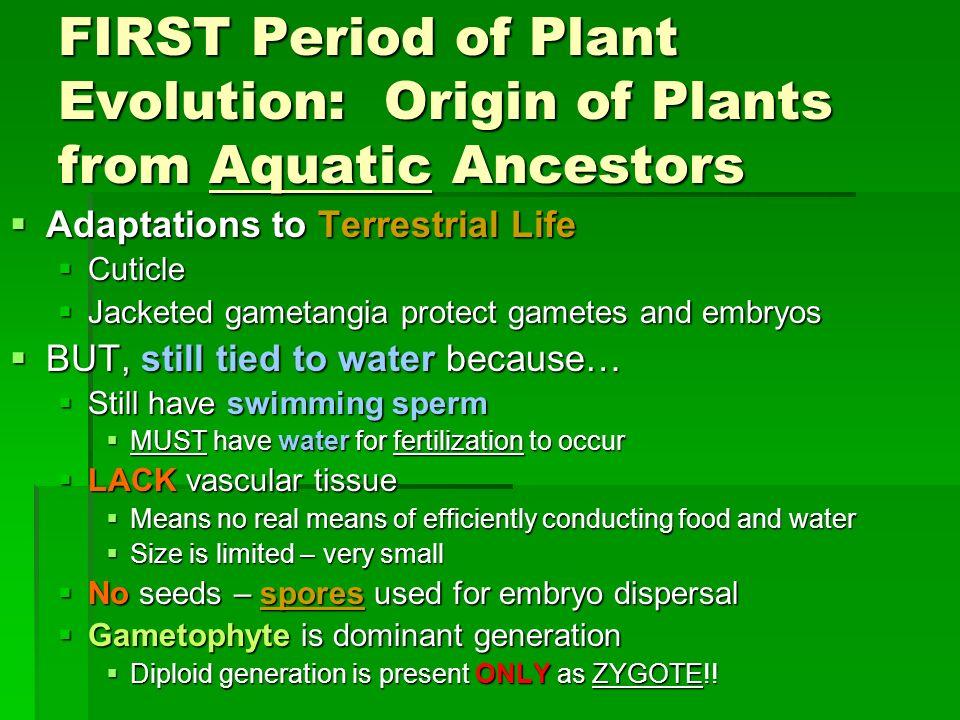 FIRST Period of Plant Evolution: Origin of Plants from Aquatic Ancestors Adaptations to Terrestrial Life Adaptations to Terrestrial Life Cuticle Cutic