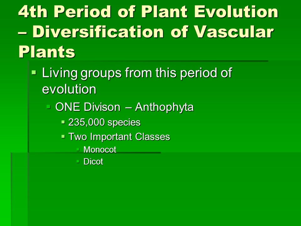 4th Period of Plant Evolution – Diversification of Vascular Plants Living groups from this period of evolution Living groups from this period of evolu