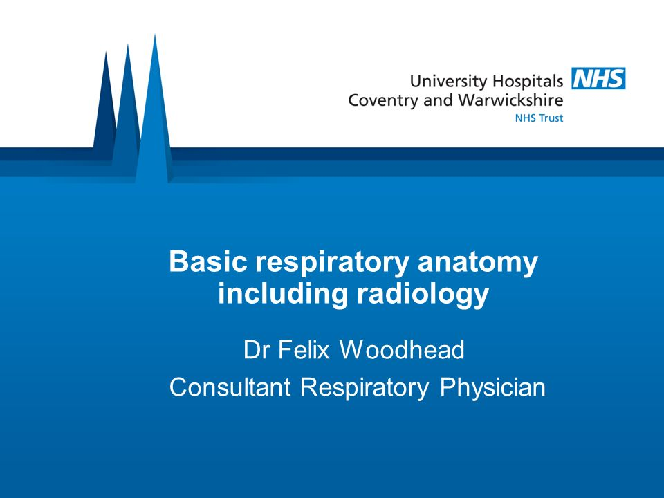 Basic respiratory anatomy including radiology Dr Felix Woodhead Consultant Respiratory Physician