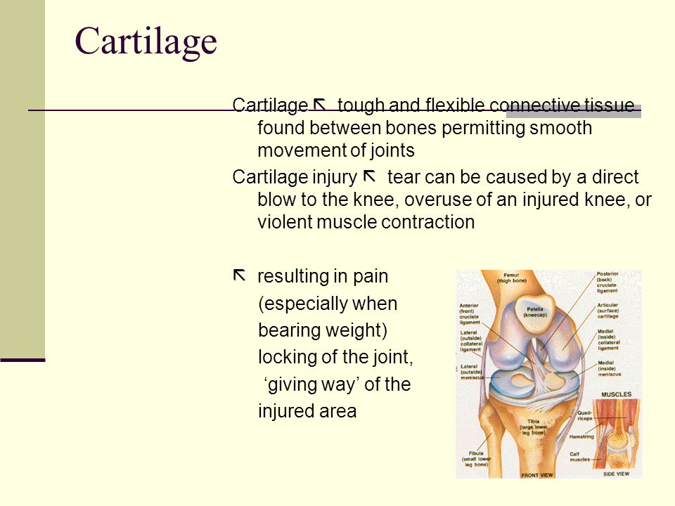 Cartilage Cartilage Cartilage tough and flexible connective tissue found between bones permitting smooth movement of joints Cartilage injury Cartilage