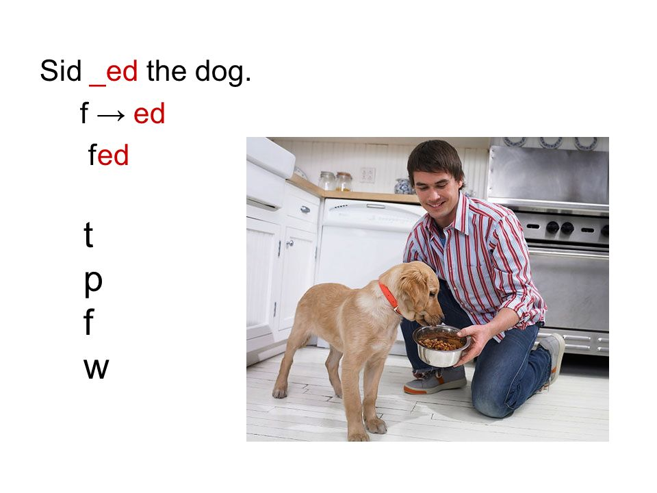 Sid _ed the dog. f ed tpfwtpfw