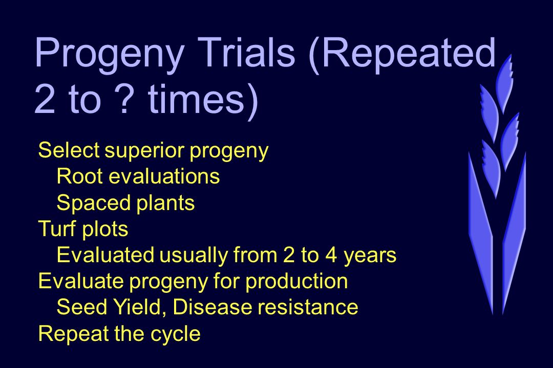 Progeny Trials (Repeated 2 to ? times) Select superior progeny Root evaluations Spaced plants Turf plots Evaluated usually from 2 to 4 years Evaluate