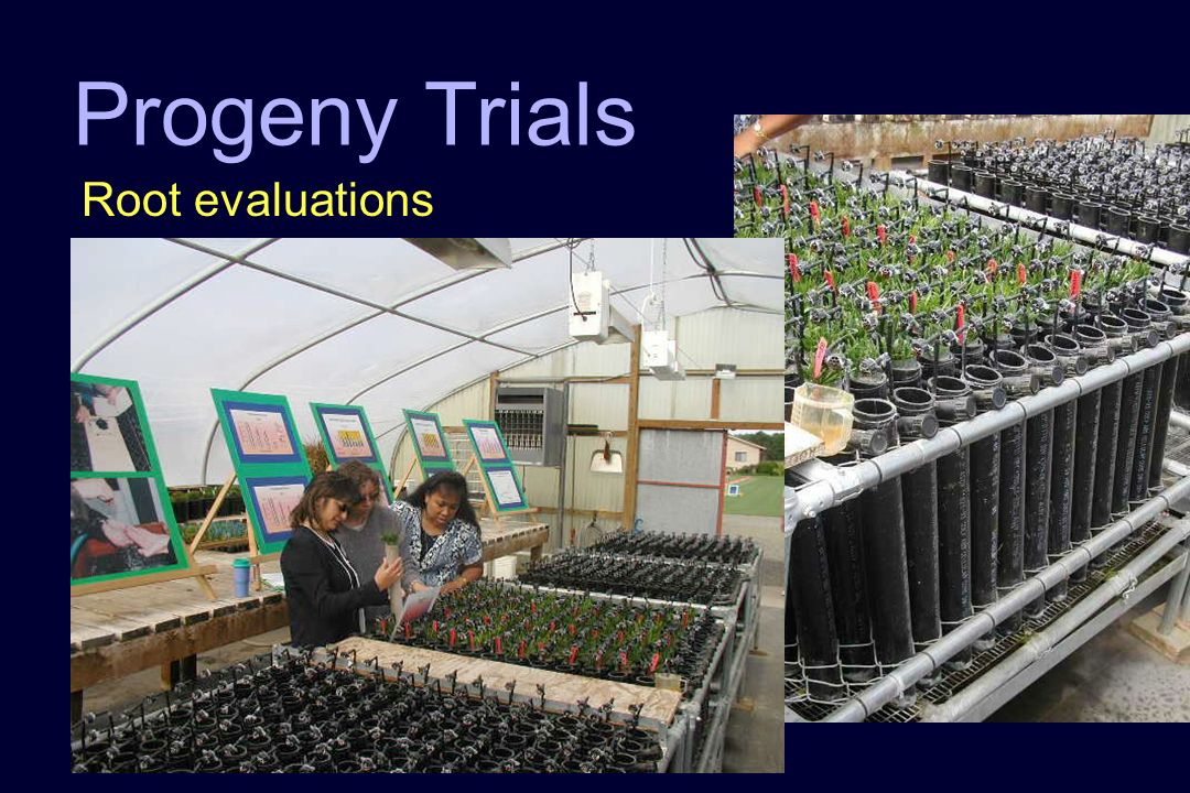 Progeny Trials Root evaluations