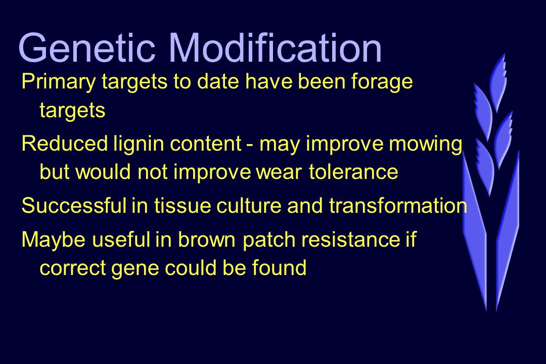 Genetic Modification Primary targets to date have been forage targets Reduced lignin content - may improve mowing but would not improve wear tolerance