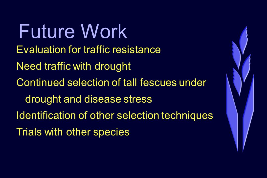Future Work Evaluation for traffic resistance Need traffic with drought Continued selection of tall fescues under drought and disease stress Identific