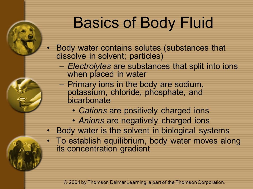 © 2004 by Thomson Delmar Learning, a part of the Thomson Corporation. Basics of Body Fluid Body water contains solutes (substances that dissolve in so