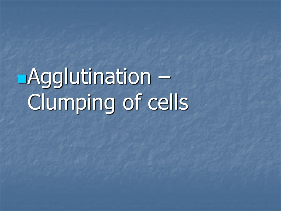 Agglutination – Clumping of cells Agglutination – Clumping of cells