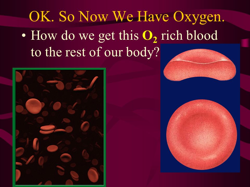 OK. So Now We Have Oxygen. How do we get this O 2 rich blood to the rest of our body?