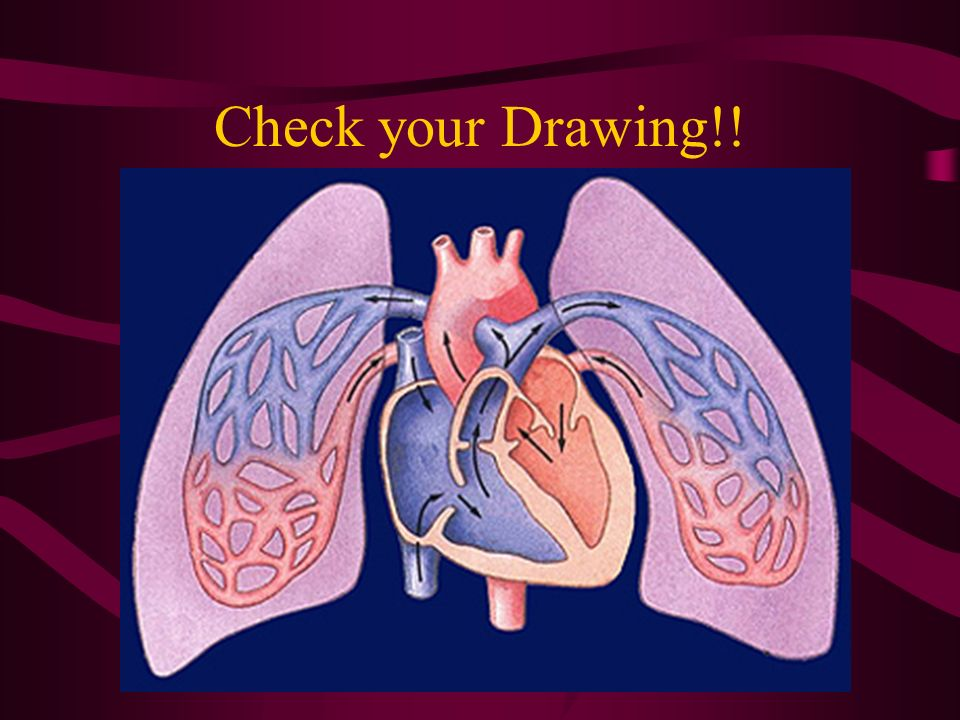 Check your Drawing!!