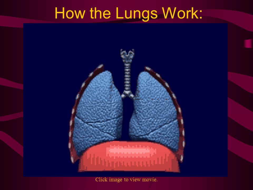 How the Lungs Work: Click image to view movie.