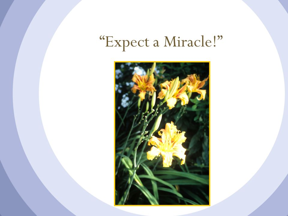 Expect a Miracle!