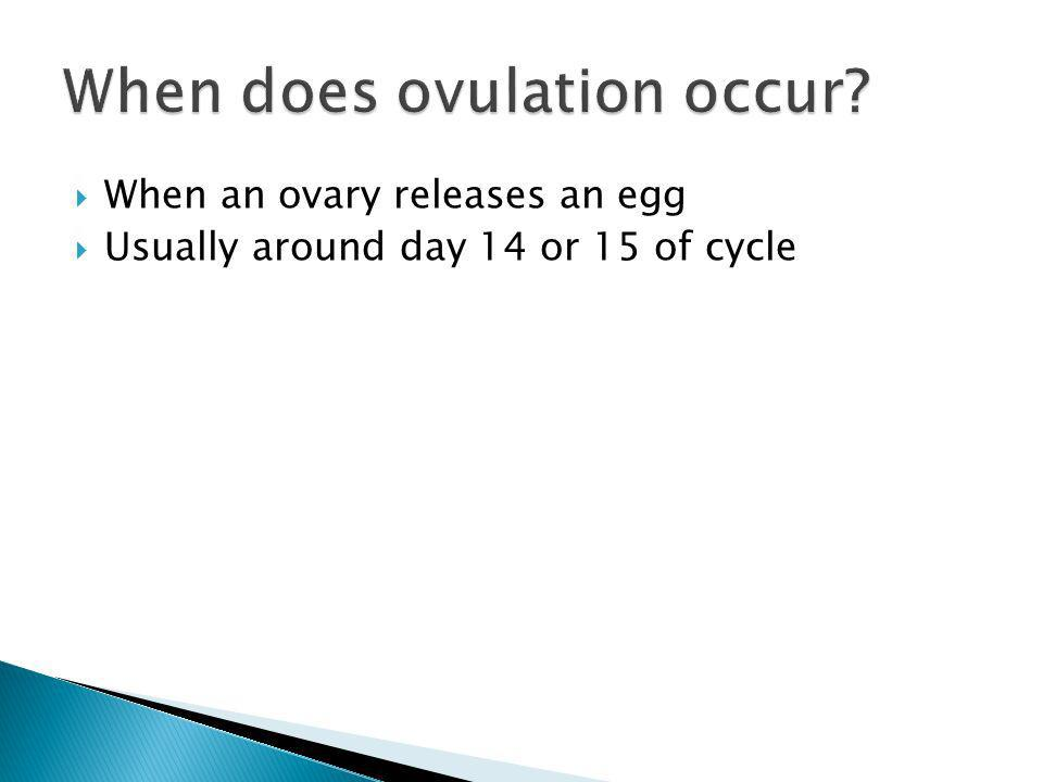 When an ovary releases an egg Usually around day 14 or 15 of cycle