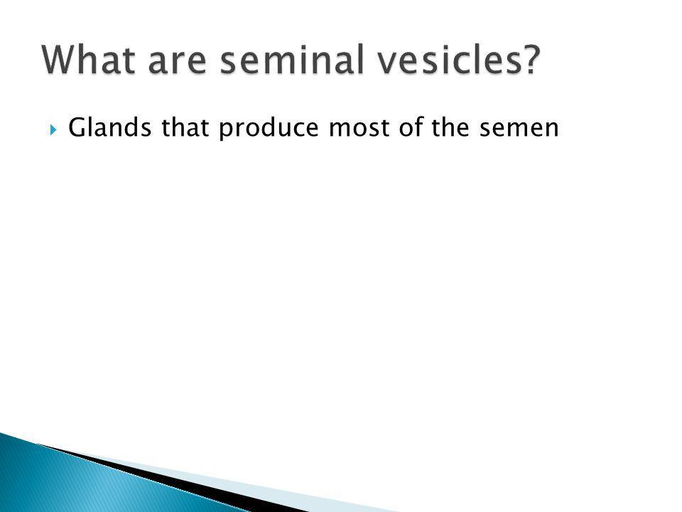 Glands that produce most of the semen