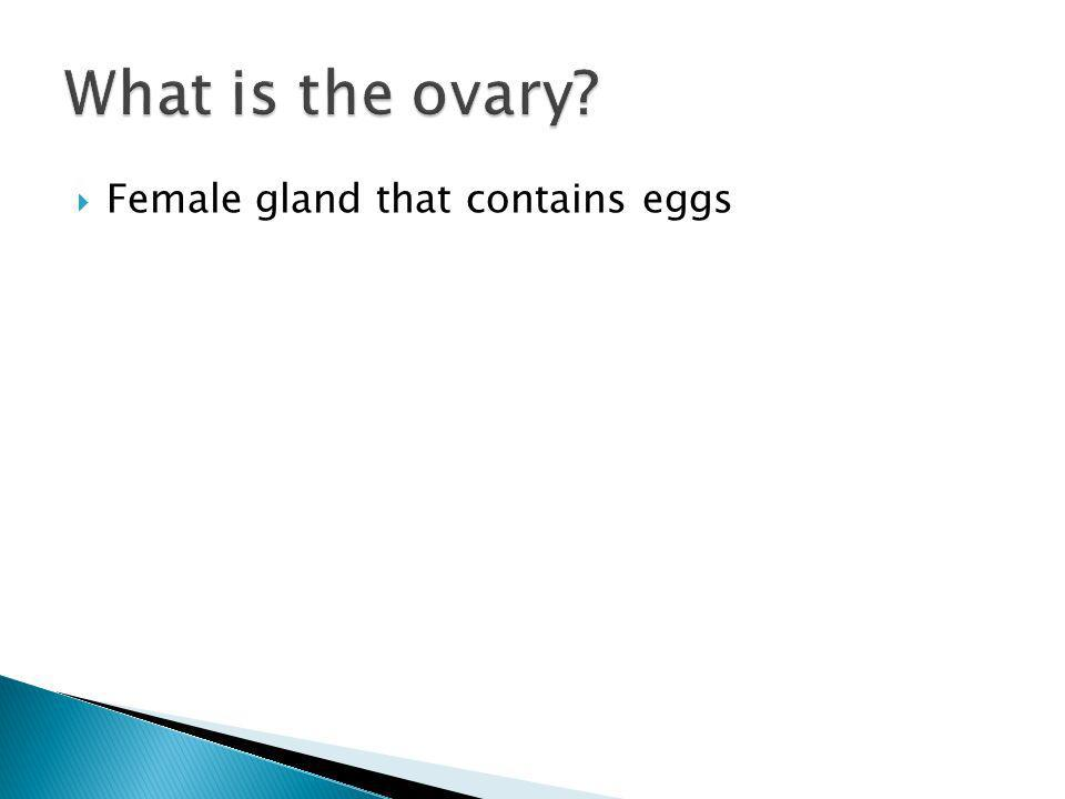 Female gland that contains eggs