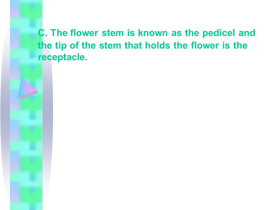 C. The flower stem is known as the pedicel and the tip of the stem that holds the flower is the receptacle.