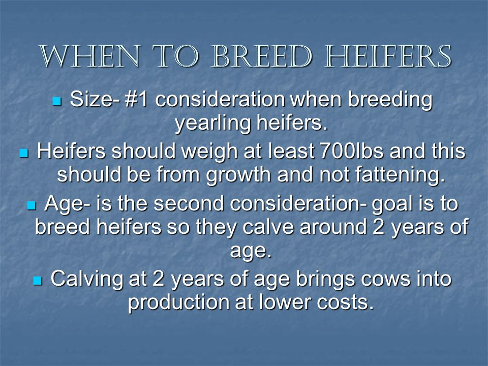 When To breed Heifers Size- #1 consideration when breeding yearling heifers.