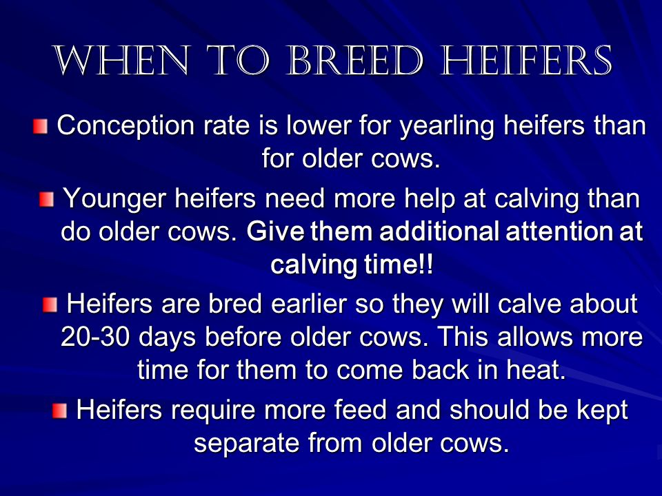 When To breed Heifers Conception rate is lower for yearling heifers than for older cows.