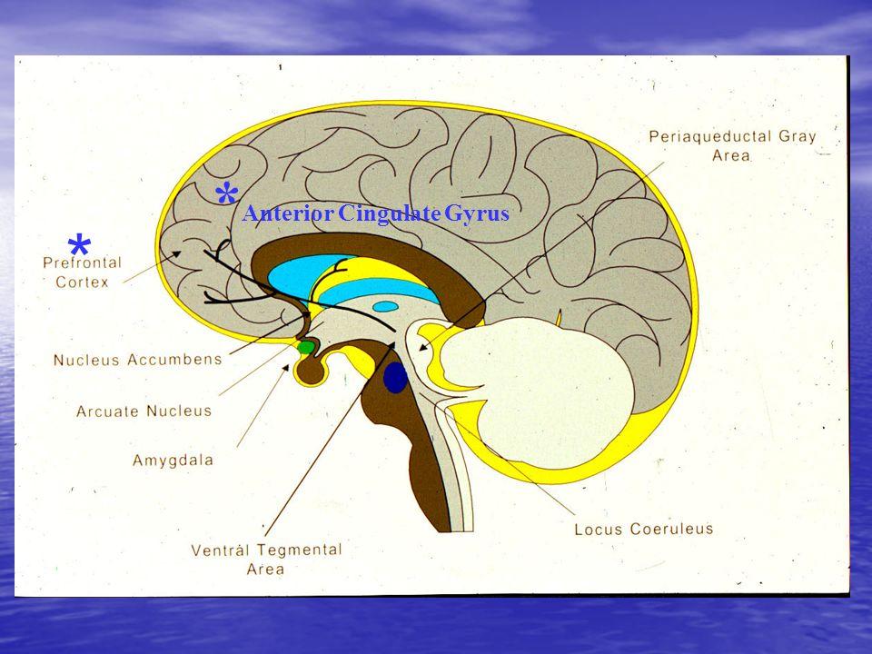 * Anterior Cingulate Gyrus * * *