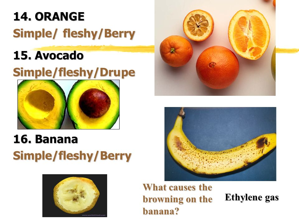 14. ORANGE Simple/ fleshy/Berry 15. Avocado Simple/fleshy/Drupe 16. Banana Simple/fleshy/Berry What causes the browning on the banana? Ethylene gas